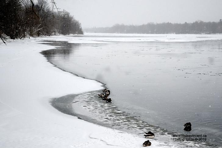 Habitants des rives glacées