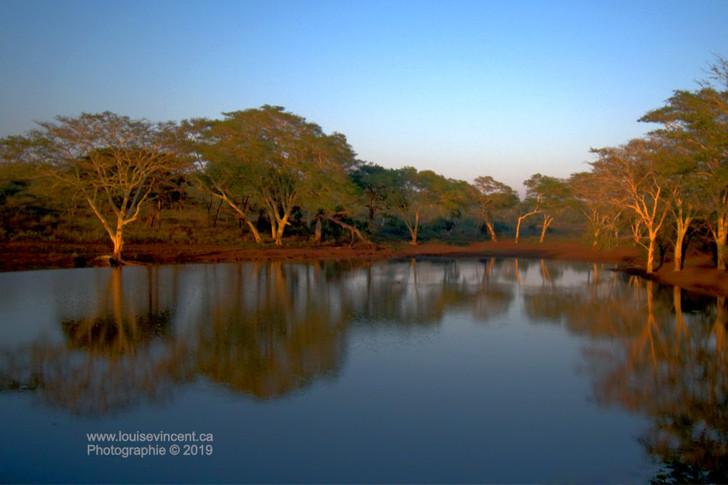 Le point d'eau des hippos