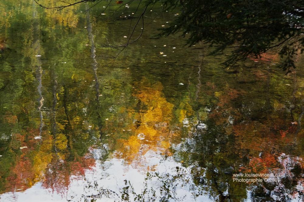 Forêt au miroir
