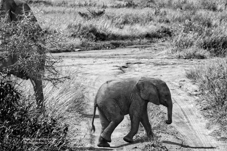 Excursion de bébé éléphant