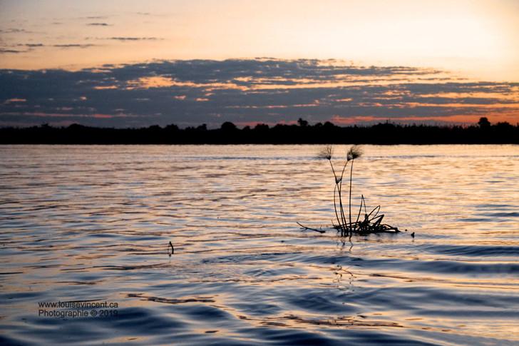 Envoûtante rivière Chobe