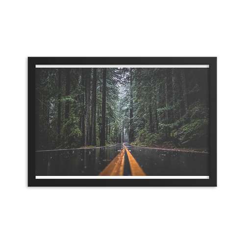 Lost in the Redwoods