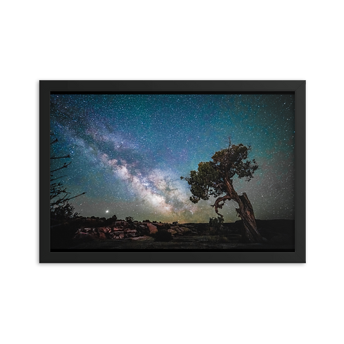 Old Juniper & The Milkyway
