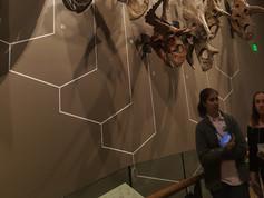 UMNH exhibits