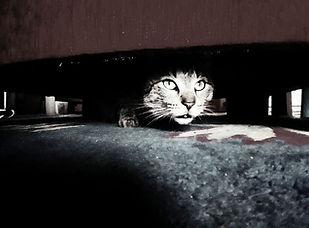 Chat sous lit Jovita Zemljič.jpg