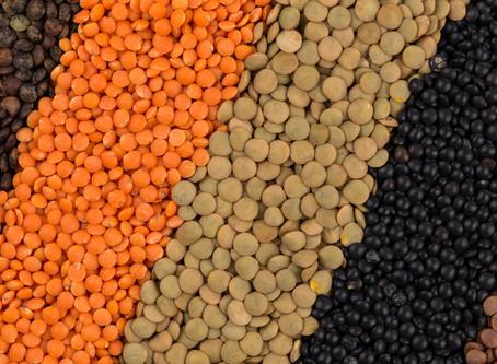 Les lentilles : le remède à la faim dans le monde