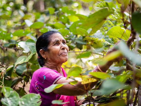 Leafymades inverkan på kvinnor i Indien