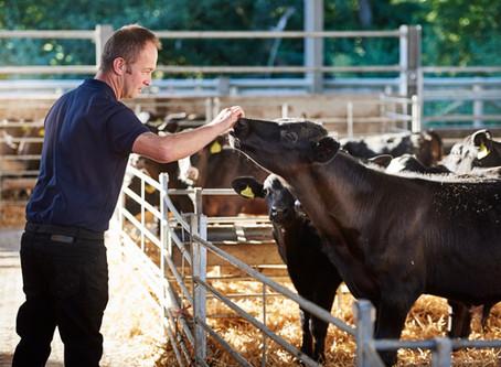 Animal Welfare High on the Agenda for OSI Europe