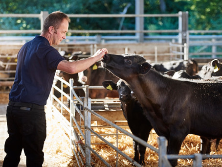 OSI Europe Takes a Crucial Step in Tracking Sustainability Progress in the Beef Industry
