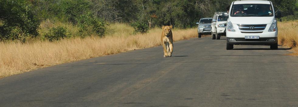 voyage parc Kruger 1745 (Afrique du sud)