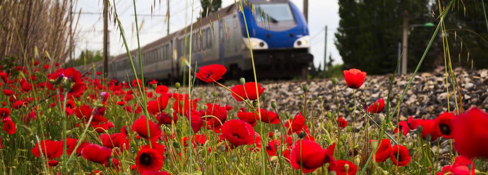 red_track.JPG
