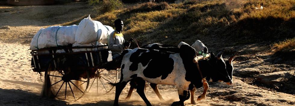 Madagascar_1312-_piste_et_route_de_Beror