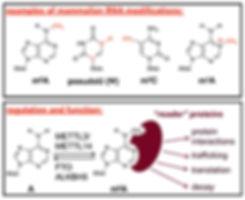 Figures - B - RNA regulation.jpg