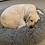 Thumbnail: Fluffy Donut hundeseng