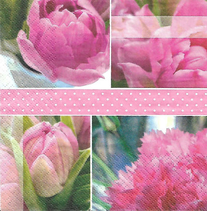 Tulipes Roses Pink