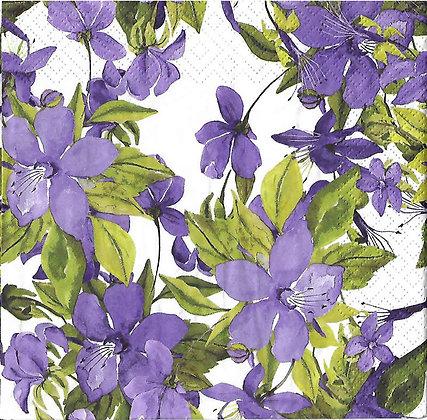 Flowerin Clematis purple