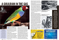 Gouldian in the Gas BirdKeeper.png