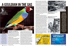 Gouldian in the Gas BirdKeeper.png