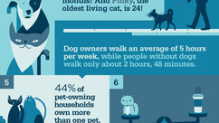 Amazing Facts about Pet Adoption