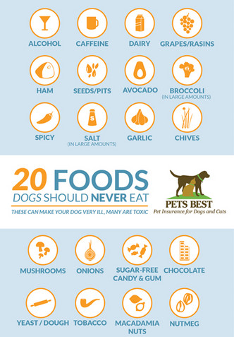 20 Foods Dogs Should Never Eat.
