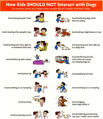 How Kids SHOULD NOT Interact with Dogs