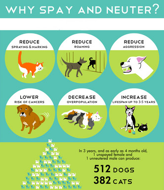 Why Spay and Neuter?