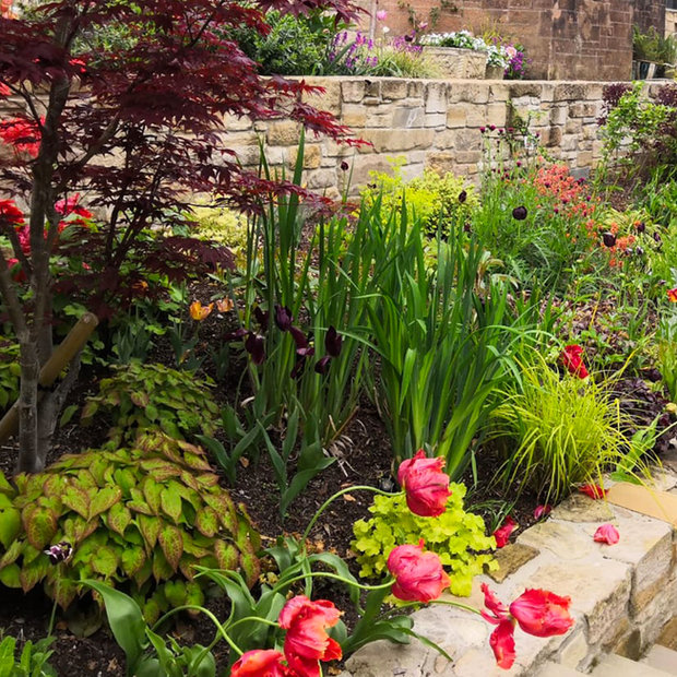 MacColl & Stokes Landscaping Planting