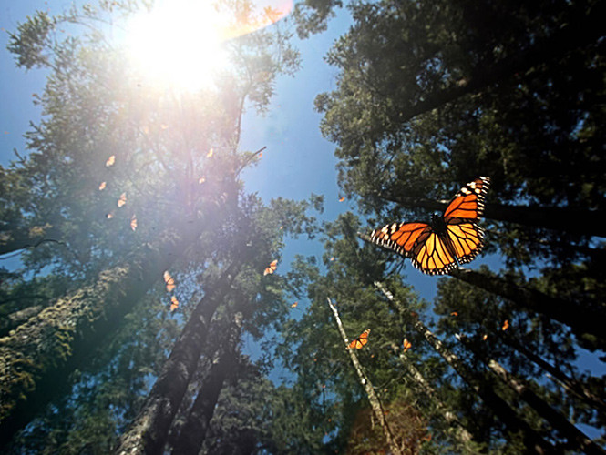 mariposa-monarca-1.jpg