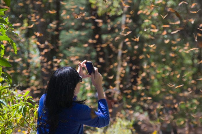 mariposa-monarca.jpg