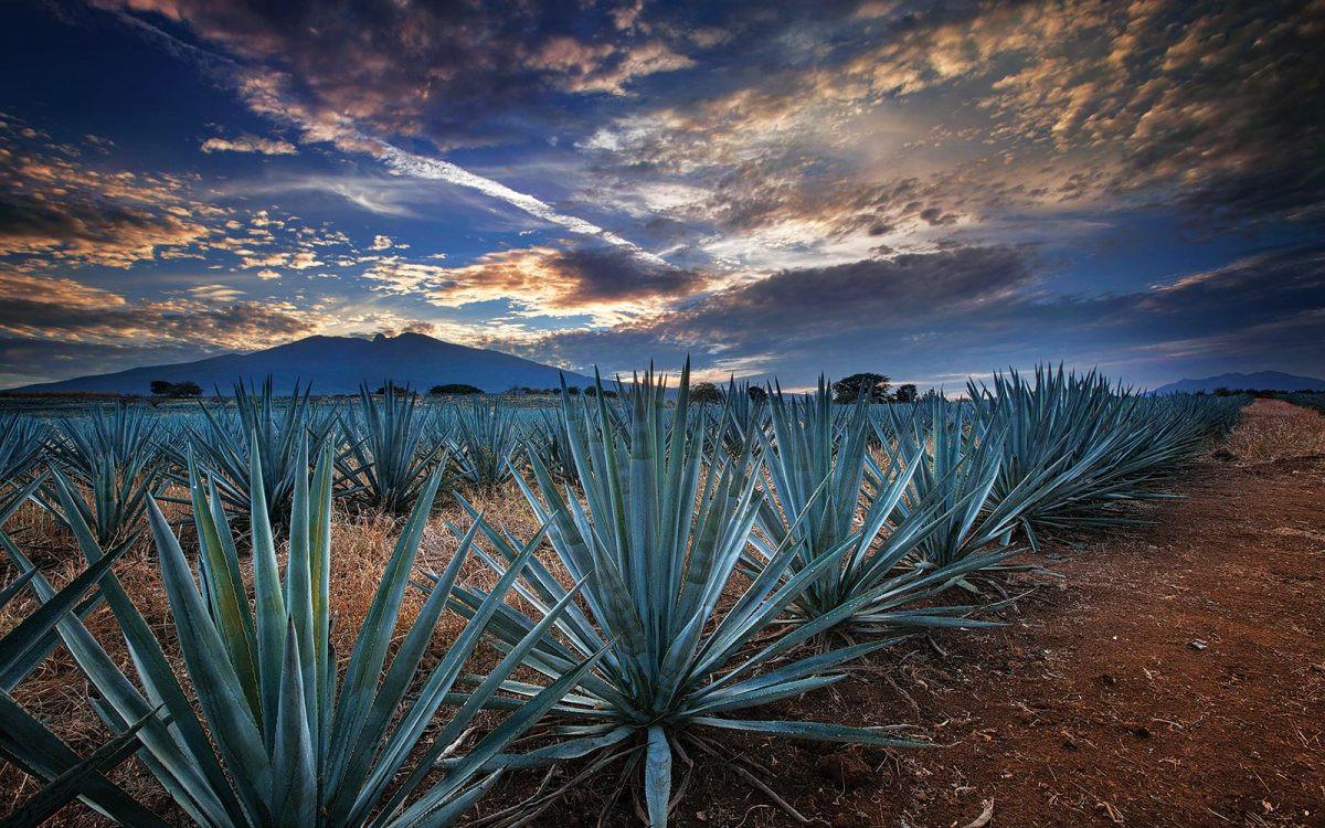 Tequila-BI_MG_1666.jpg
