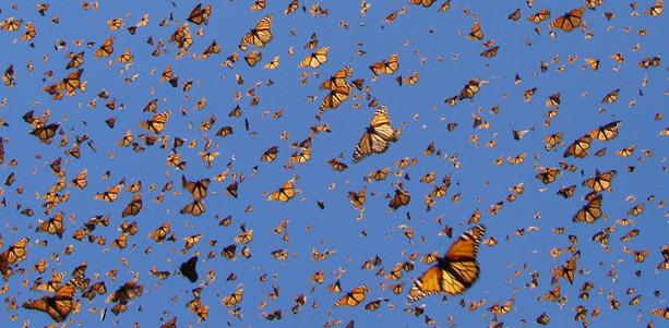 613197_mariposas.jpg