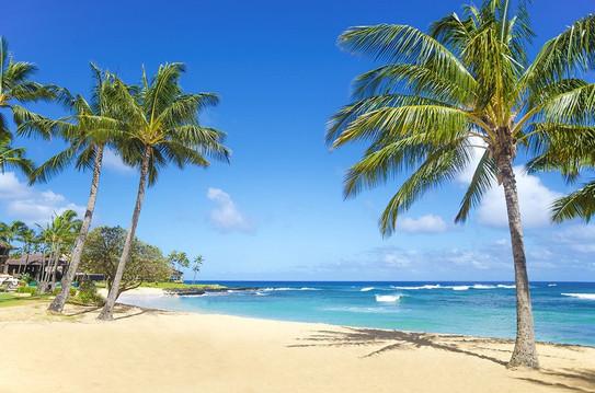 tuinposter_tropisch-strand-met-palmbomen