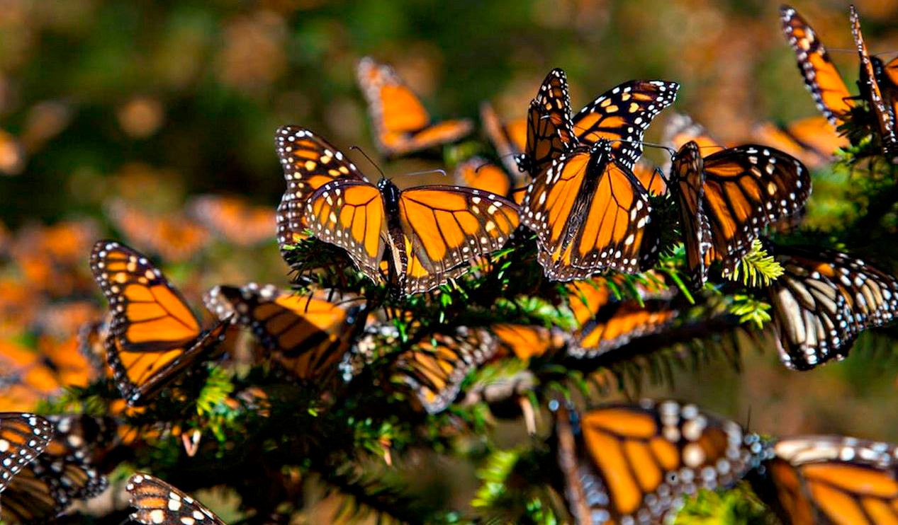 mariposa-1.jpg