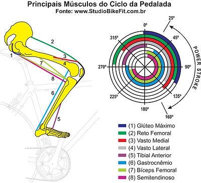 principais-musculos-do-ciclo-da-pedalada