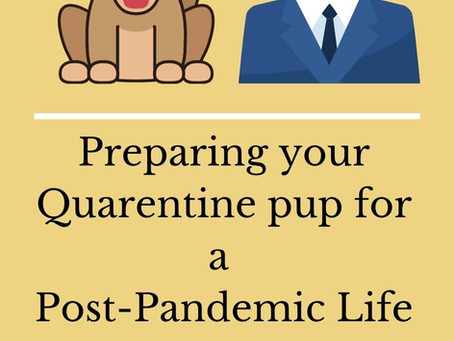 Quarantine Puppies in a Post-Pandemic World: How to Help Them Thrive