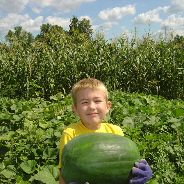 His First Watermelon!