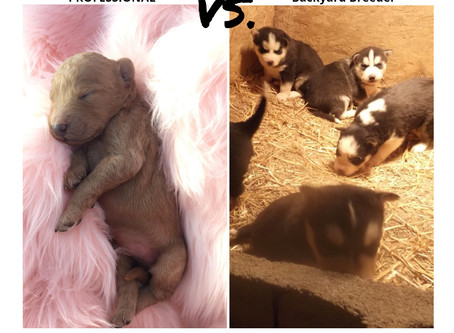Not all Breeders are Equal