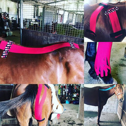 Some of the tapings I have been doing to help horses with sore muscles and inflammation - ask for mo