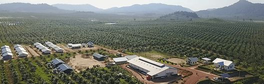home-sustainable-indonesian-palm-oil-144