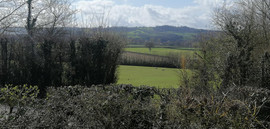 view over hedge.jpg
