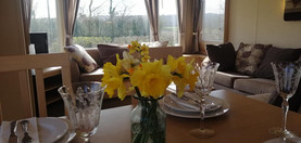 daffodils and view.jpg