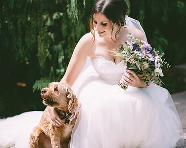 Wedding Planner Bride London Ontario Dog Puppy