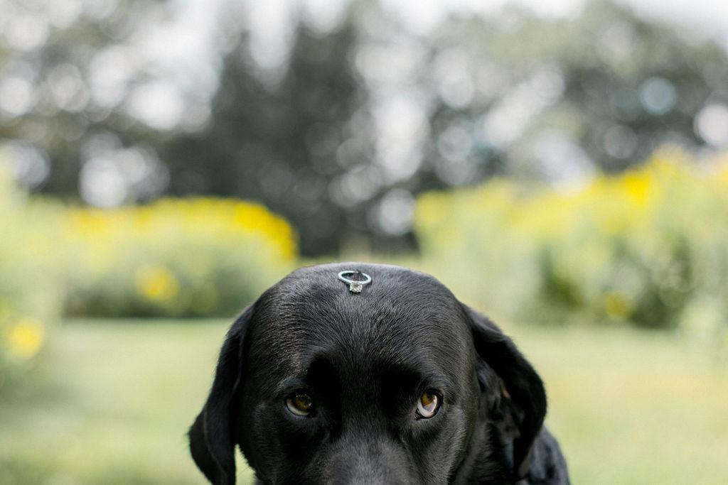 London Ontario Wedding Dog