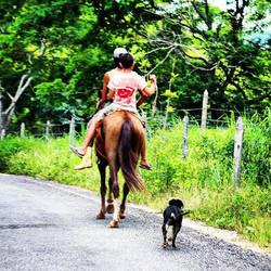#estradas #cavalo #domingo #cachorro #dog #mardeespanha #vainocavalinho #maresp #amomaresp #tranquil