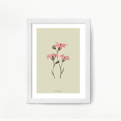 Geranium Print - Framed