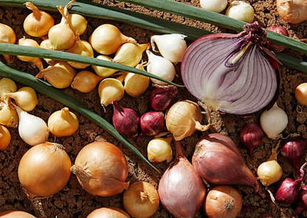 onions from upspash.jpg