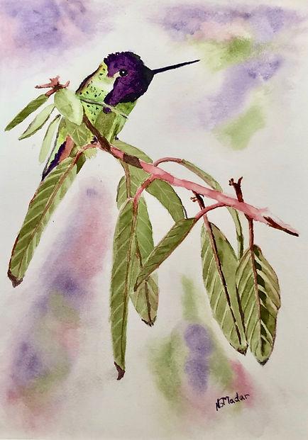 watercolor hummingbird by Nancy Madaar.jpeg