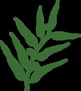 Eucalyptus Plant.png