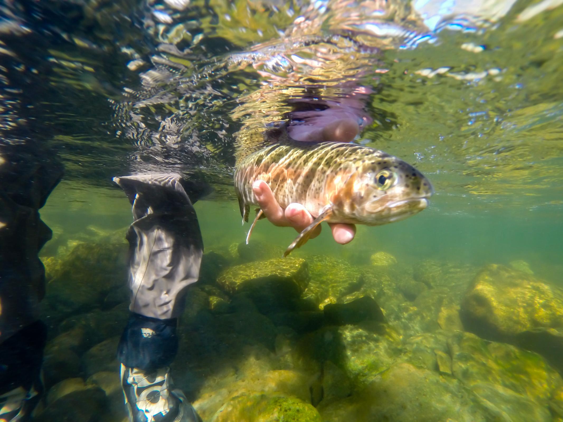 Underwater Rainbow; Boulder River