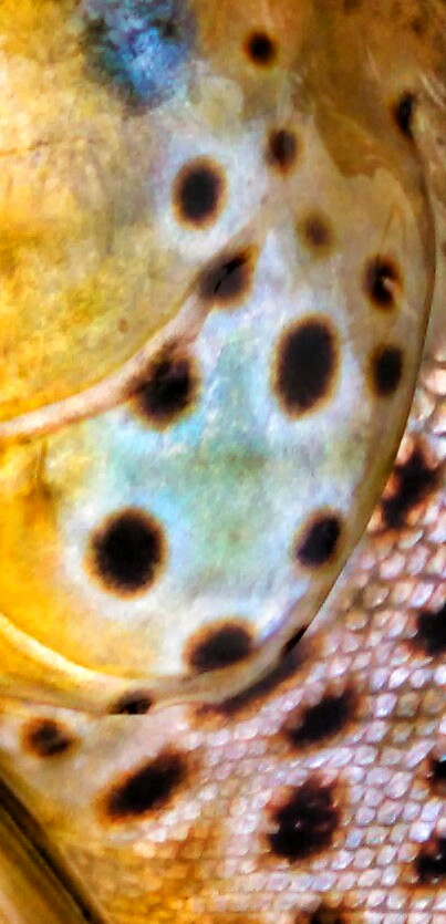 Brown trout close up